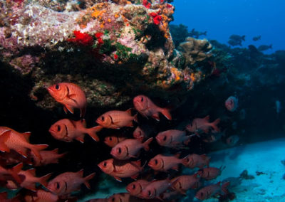 Red fishes - Topdive