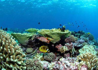 Coral garden - Topdive