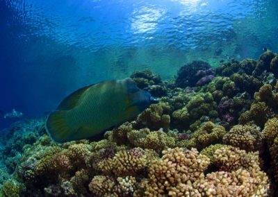 Dive with Topdive in Fakarava