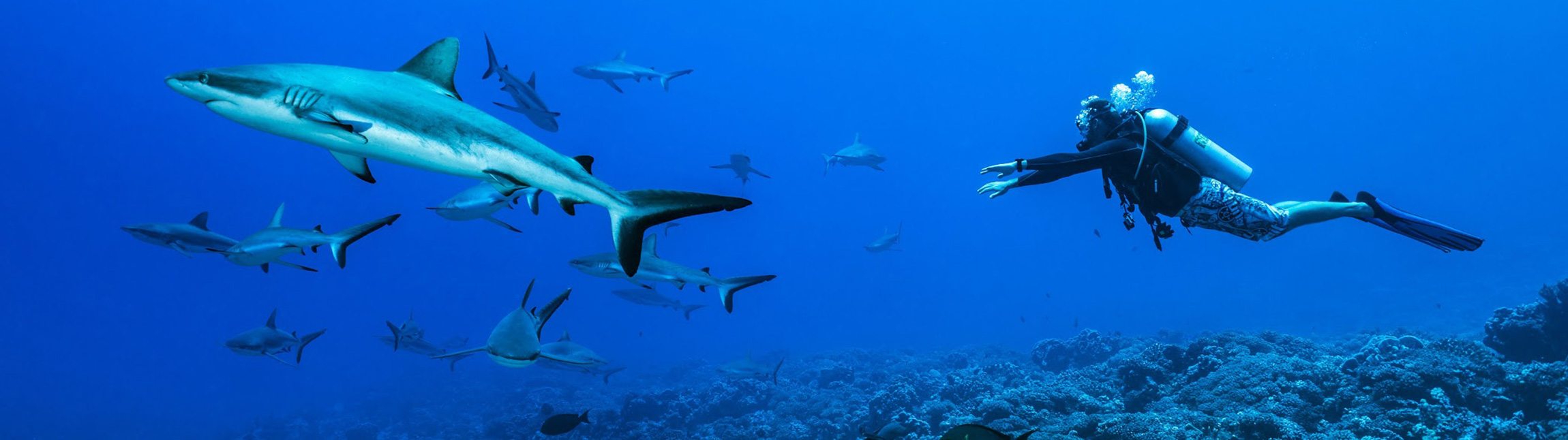 Discover Shark Diving