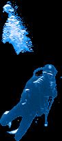 Plongeur - TOPDIVE