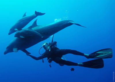 Diver and Dolphins in Tiputa, Rangiroa with Topdive