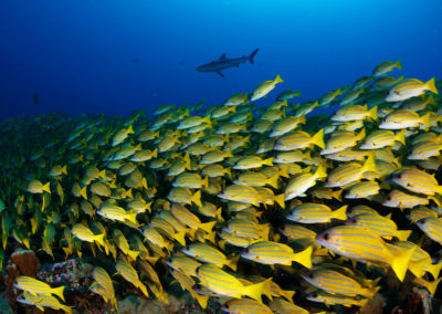 Reef fishes species