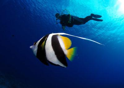 Fish and diver in Bora bora - Topdive - copyright-frederique-legrand