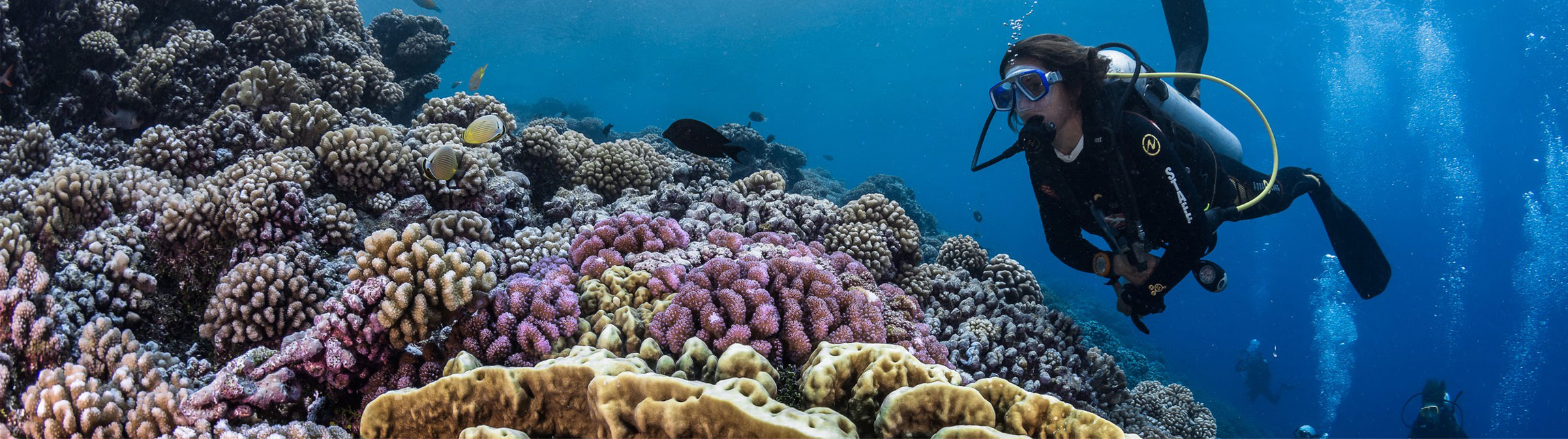 Book the dives in Polynesia with Topdive