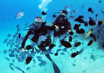 Diving with plenty of fishes in Tahiti