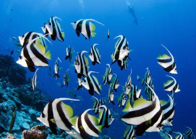 Tetiaroa - Multicoloured fishes - Topdive -  Photos T-Kotouc