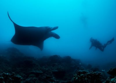 The Manta ray and the diver - Topdive