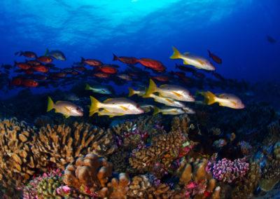 Fakarava-Nord - Multicolored fish - Topdive