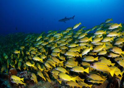 Underwater fauna of Fakarava Sud - Topdive