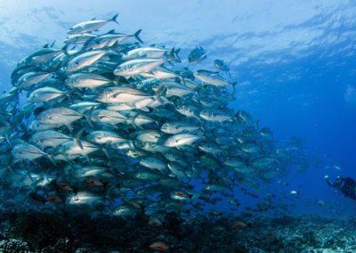 Shoals of dancing fish in Tiputa- TOPDIVE