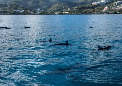 Dolphins in Polynesia