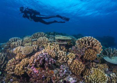 Coral reef of Tahiti - Topdive