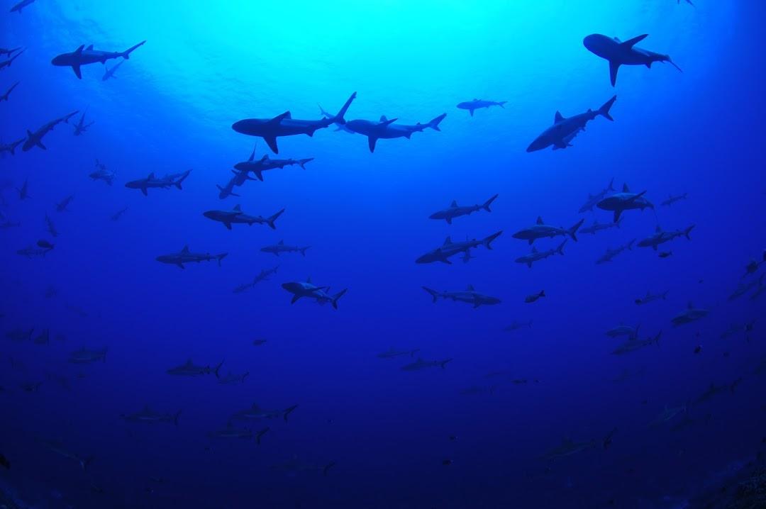 Grey shark wall