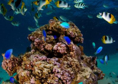 Snorkeling in Bora Bora with Topdive