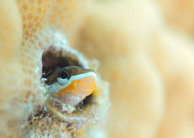 Tahiti-Aquarium-Small fish-Topdive