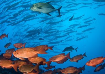 Plongée sur le spot de Tapu à Bora Bora avec Topdive