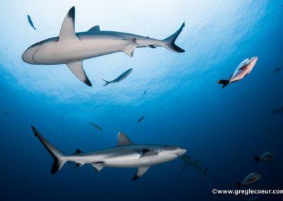 Plongée à Bora Bora avec Topdive