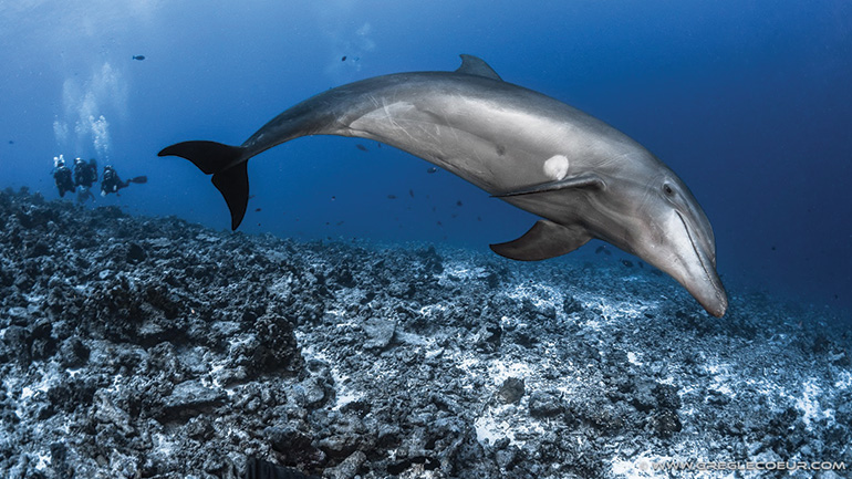Dolphins watching in Tahiti