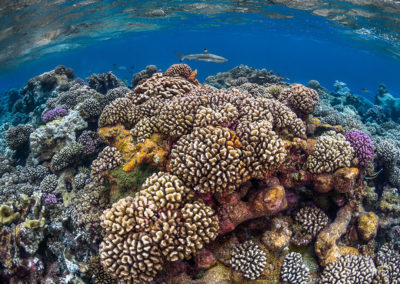 Polynesian coral reef beauty