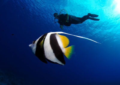 Fish and diver in Bora bora - Topdive - copyright-frederique-legrand