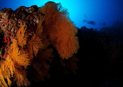 Tahiti Arue Madrepores - Corail Topdive