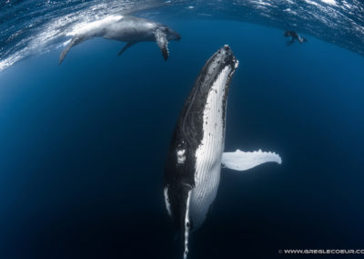 Whales watching in Tahiti © greglecoeur