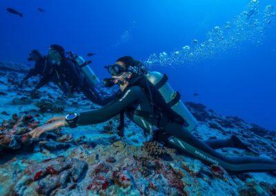 Nitrox scuba diving in Fakarava with TOPDIVE
