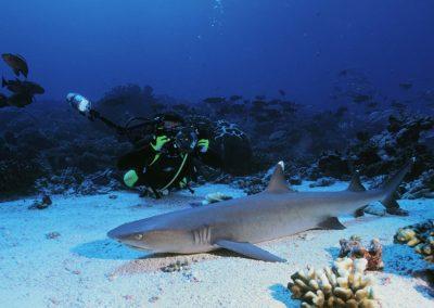 Requin dormeur - topdive