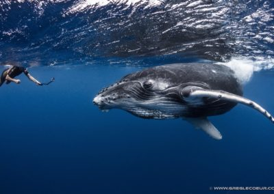 Whales watching in Tahiti - Topdive