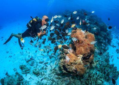 Baptême de plongée aux épaves à Tahiti avec Topdive
